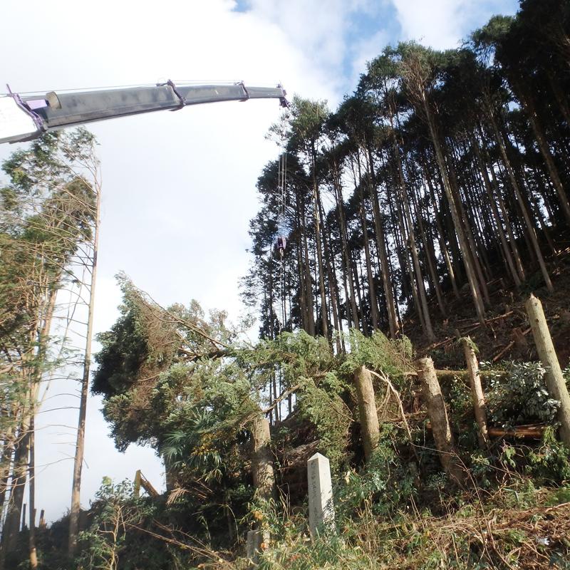 森林特殊伐採